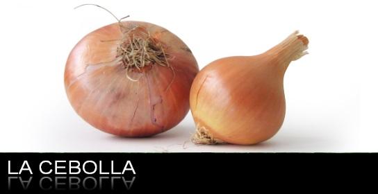 cebolla-nutricionista-madrid