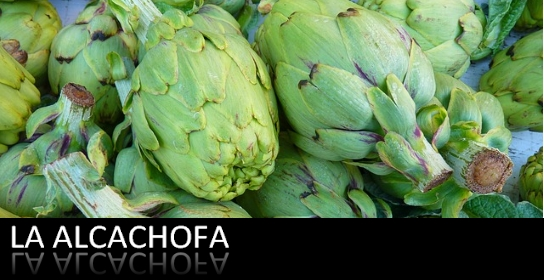nutricionista-madrid-alcachofa